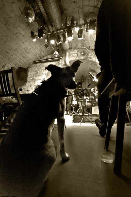 Canis musicus